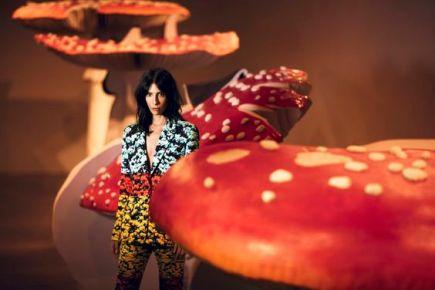 magic-mushrooms-editorial